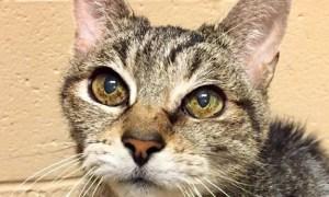 Kate! HSTC Pet of the week!