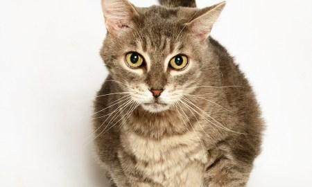Adopt Sammy! Pet of the week!