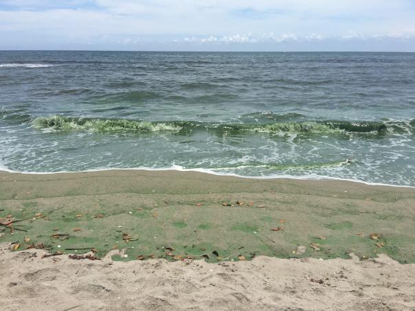 Algae rolling in the tide at Bathtub Beach on Hutchison Island, 6-26-16, JTL