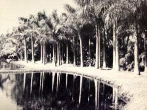 A Lagoon on the Mt Pisgah Property, ca ca. 1950 (Photo Aurthur Ruhnke via Sandra Henderson Thurlow.)