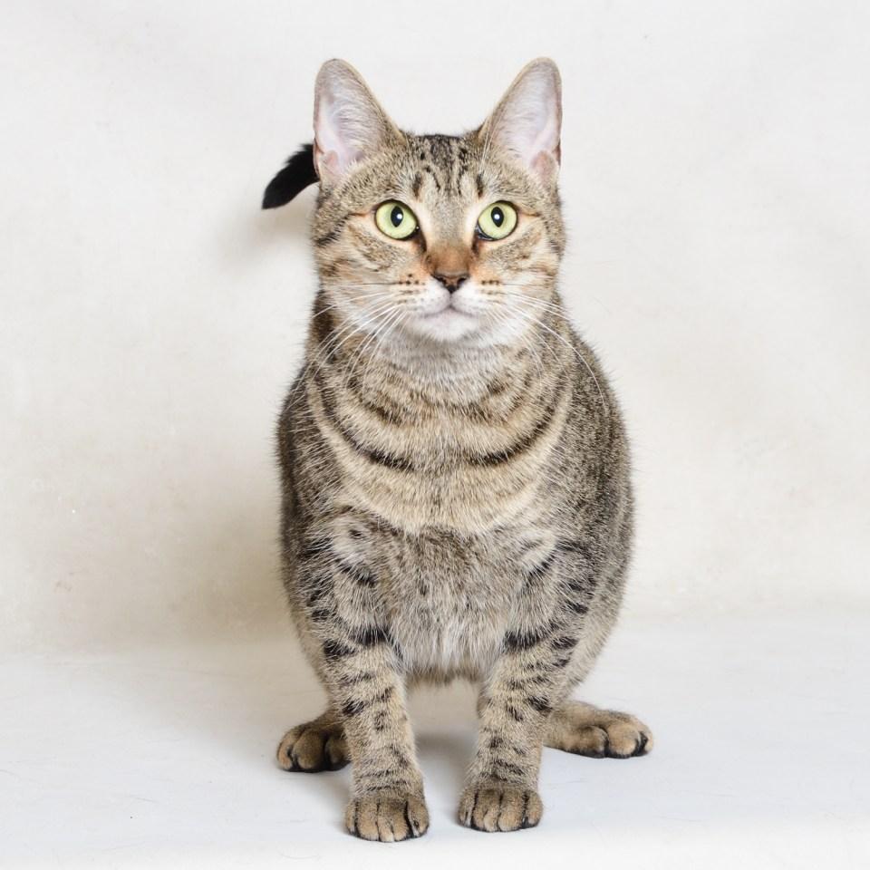 Adopt Kitty! Pet