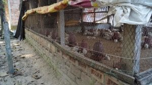 Khaleda's chicken coop