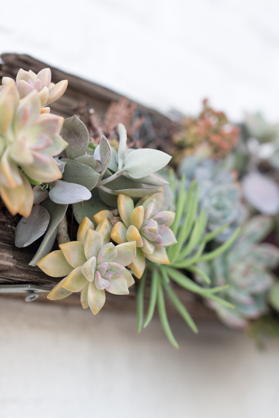 cute coffee shop in San Diego, Communcal Coffee, Coffee + Flowers, fashion blog, food blog, Treats and Trends, succulents