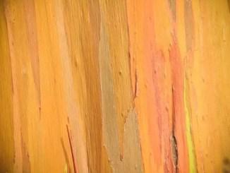 Striped wood by Bryce Eriksen