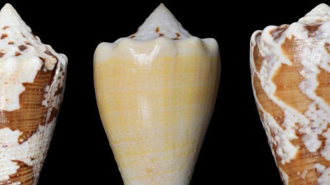 marine snail