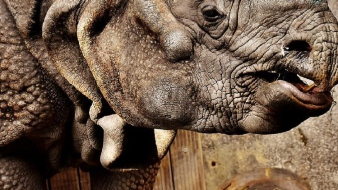 rhino, skin, 3-d printed