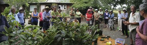 Demonstration of avocado grafting at Fenemors, Nelson. Photo: David Wayne