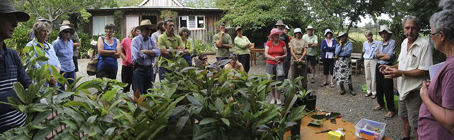 Demonstration of avocado grafting at Fenemors, Nelson. Photo: David Wayne