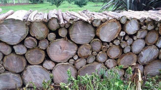 Timber used as fence at Waiongana