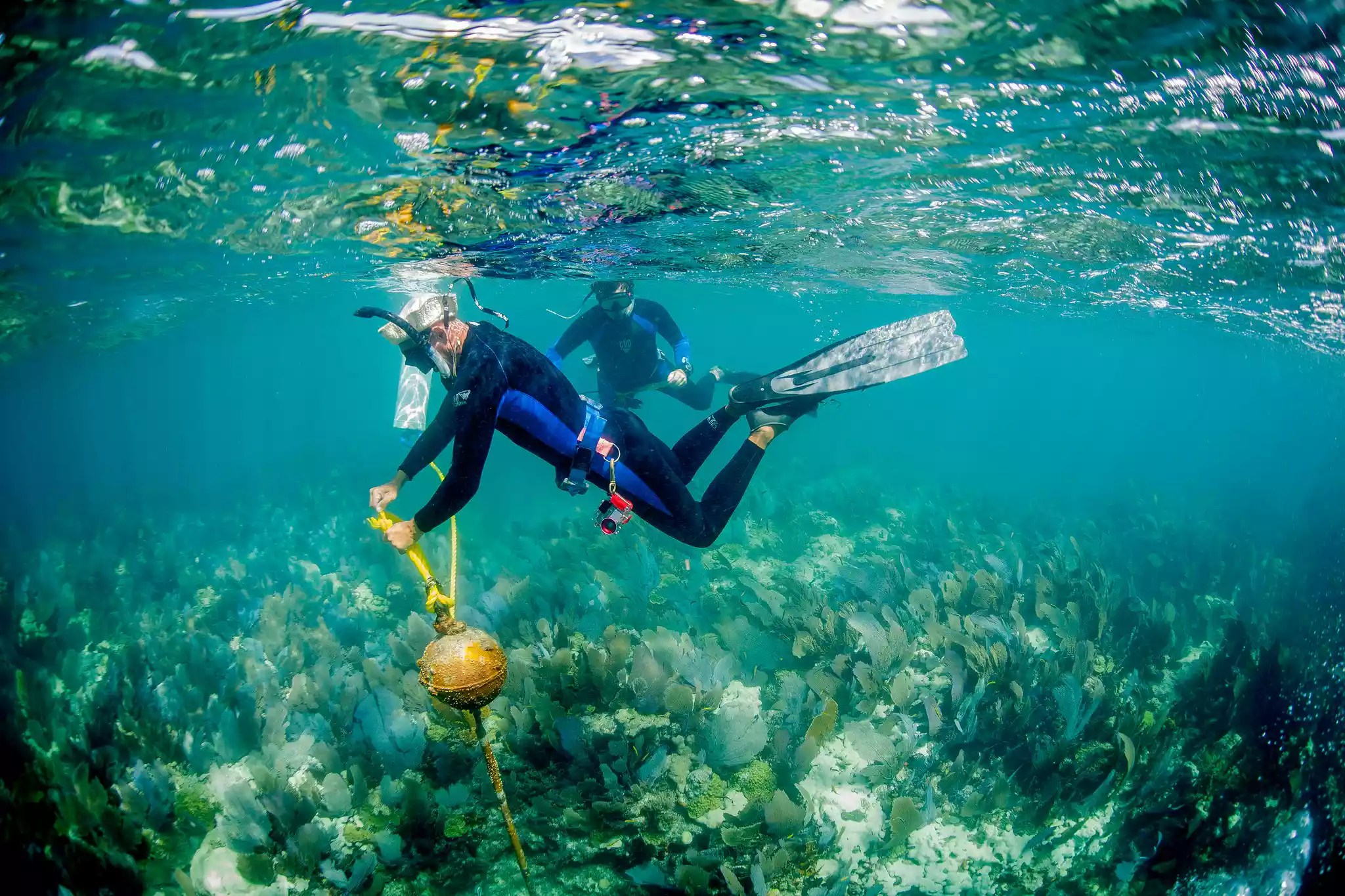 Divers survey the waters in a marine sanctuary