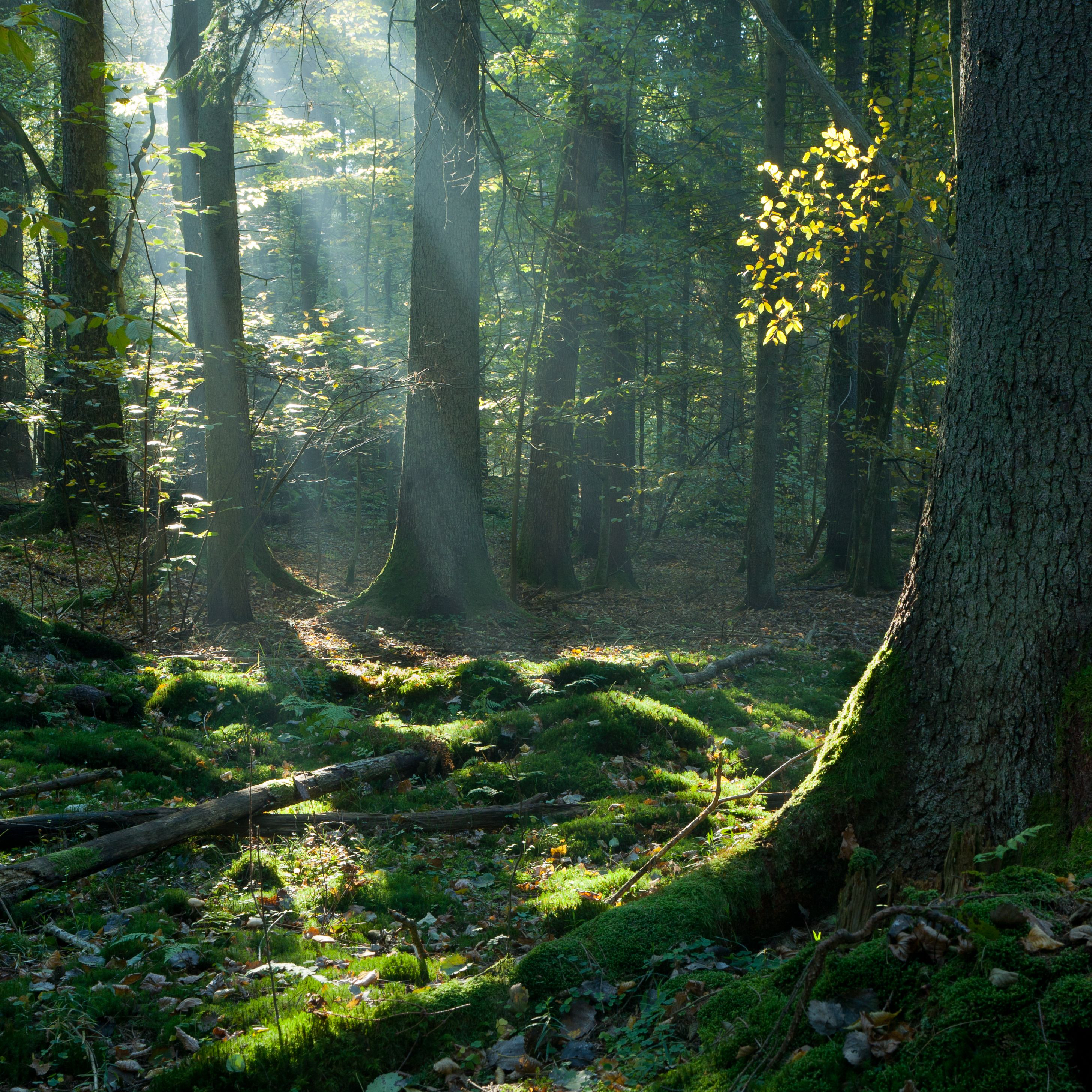 'america's forest' with host chuck leavell of the rolling stones explains how forests can help climate change, the economy and so much more. How To Identify A Tree By Its Bark