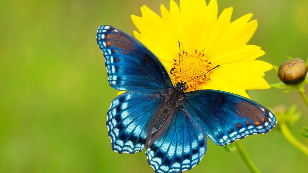 5 Tips For Photographing Butterflies