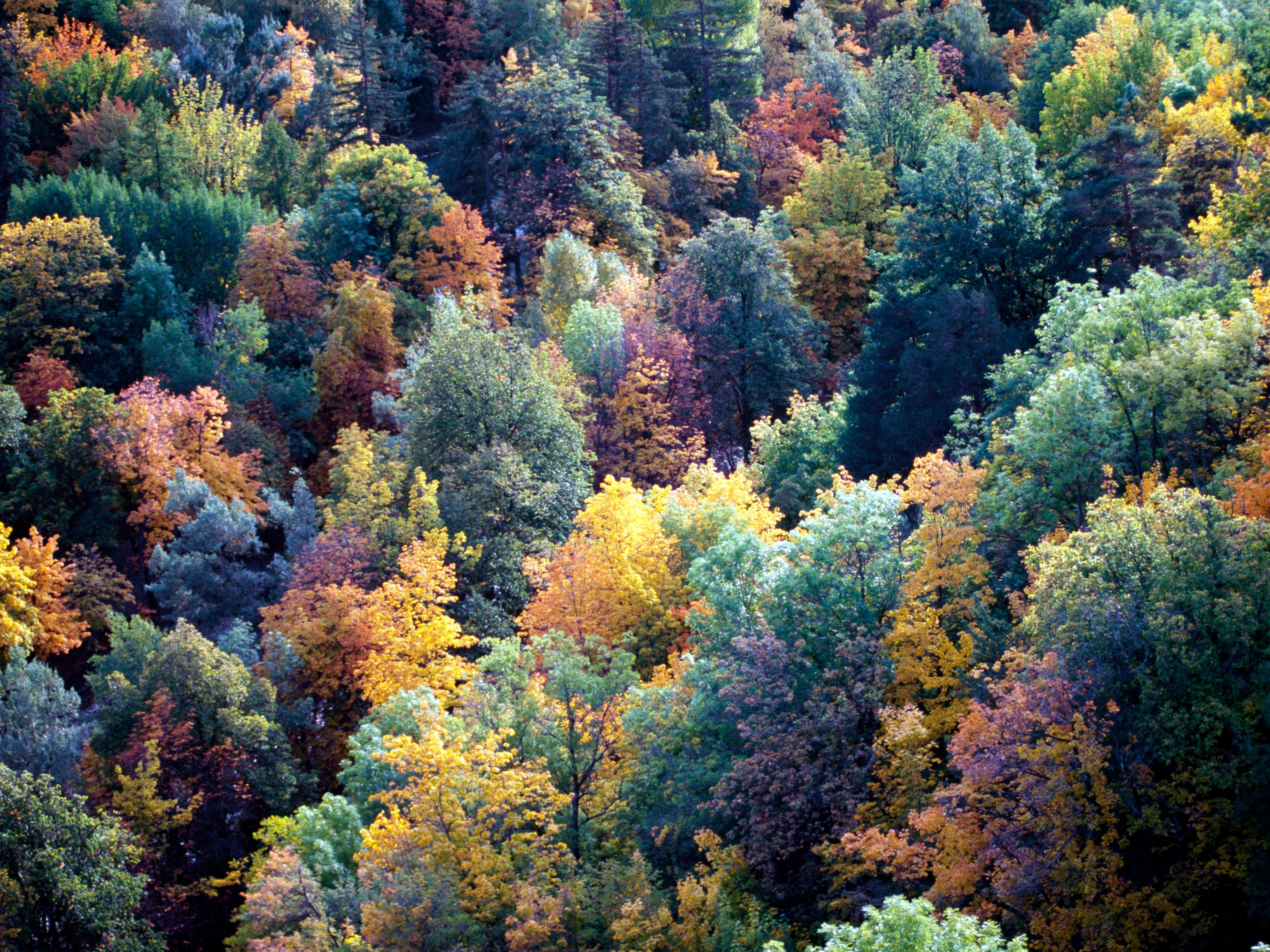 My paper discusses climate, animals, plant life, and more found in deciduous forest throughout the world. Land Biomes Temperate Forests
