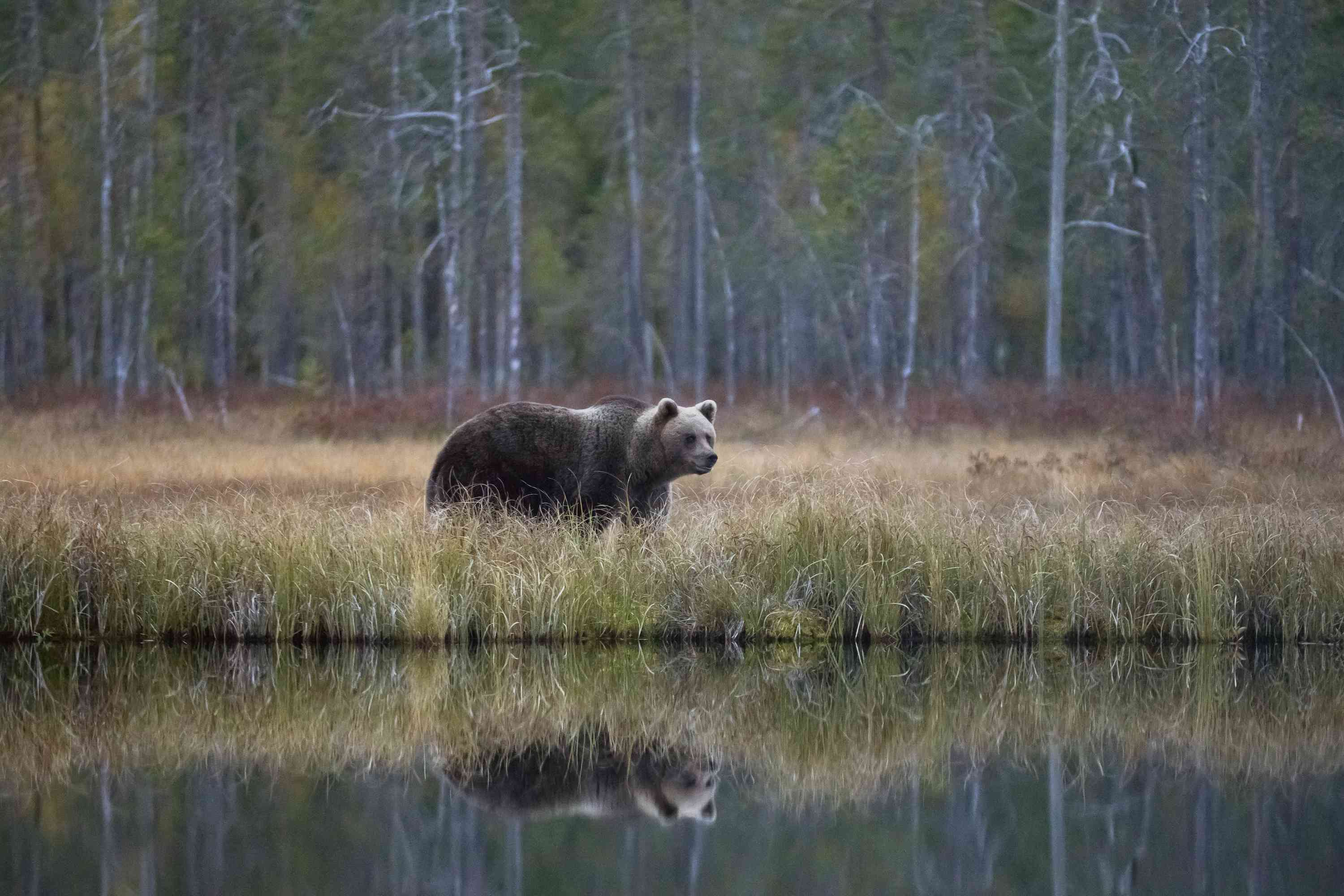 Major biomes include deserts, forests, grasslands, tundra, and several types of aquatic environments. 15 Animals That Live In The Taiga
