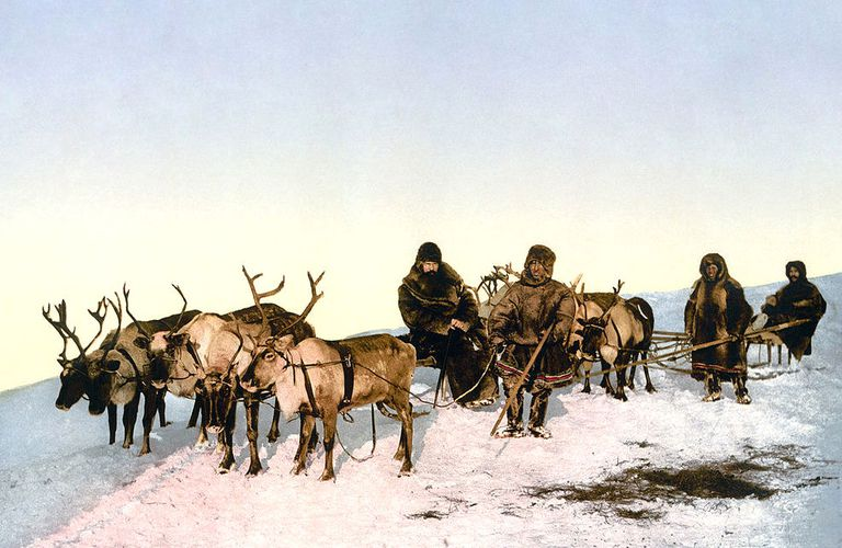 Melting Ice Unleashes Live Anthrax From Dead Reindeer Frozen Since Wwii