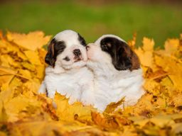 Puppy diet
