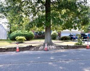 Tree Damage Appraisal