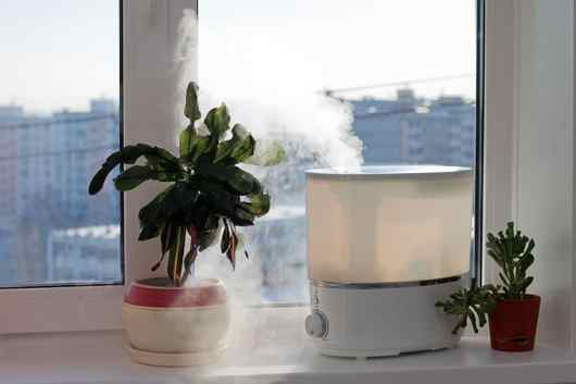 Plant next to humidifier