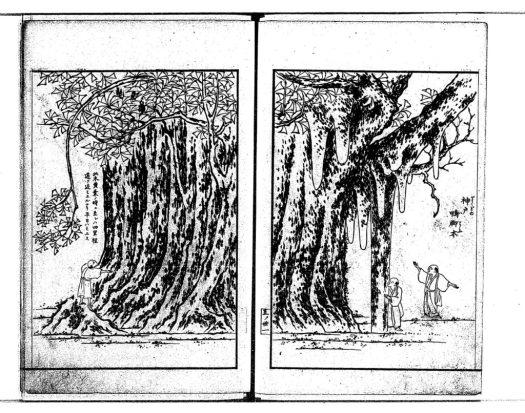 godo-icho-e1887
