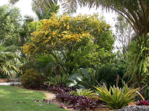Senna polyphylla (Desert cassia)