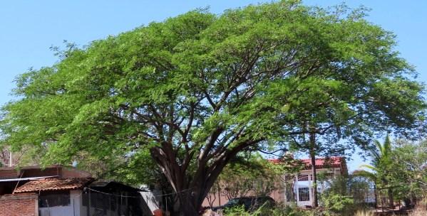 original-ear-pod-tree