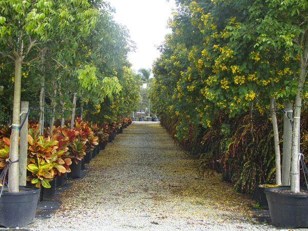 Landscape Planning With Salt Tolerant Trees And Salt Tolerant Tree Suggestions