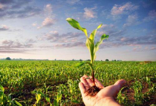 Agricoltura biodinamica: Studio Aperto servizio delle 12.25 del 13/11