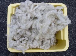 fertig gewaschene Wolle