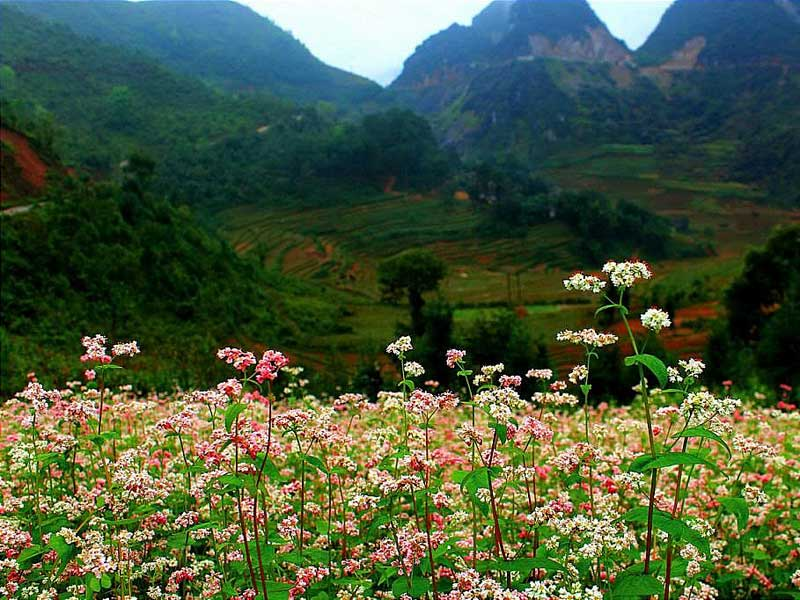 Things to See Ha Giang, What to do Ha Giang