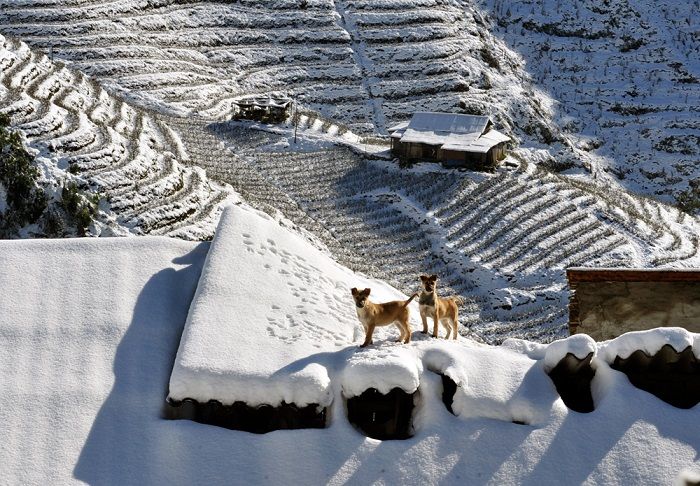 Terraced fields are all covered by snow