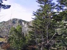 Sorbo degli uccellatori, faggio, pino mugo e abete bianco tra le rocce di Monte Nero