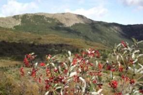 monte capra-santagostino_galli_03