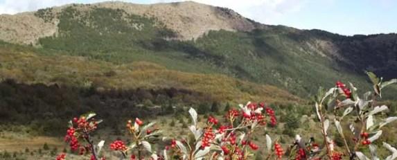 monte capra-santagostino_galli_03_