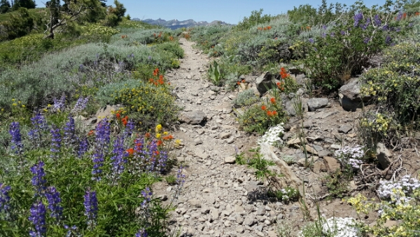 Back on the PCT Again: From the Sierras to the Cascades