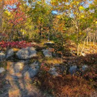 Mt Monadnock Fall Color
