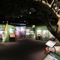 Stone Mountain Museum