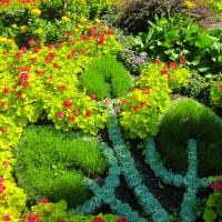 Queen Elizabeth Park Flowers