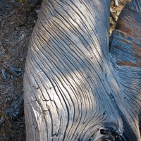 Wind Carved Wood