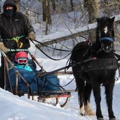 Horse-sledding