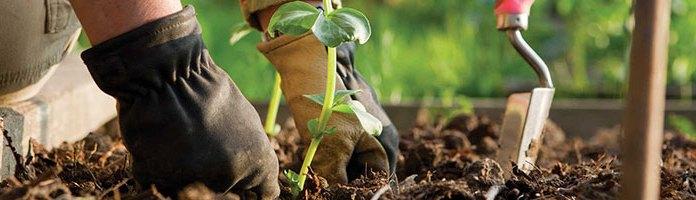 Narzędzia ogrodnicze