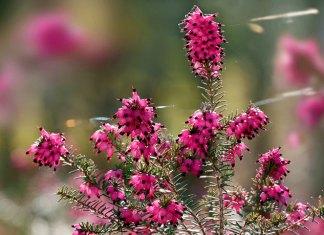Jakie rośliny kwitną w lutym?