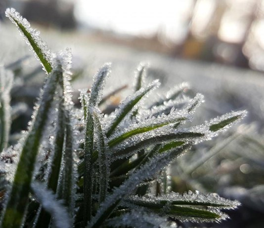Jak przygotować ogród do zimy?