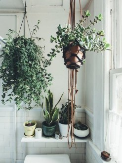 Beautiful Plant Decors For Your House 18
