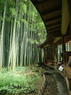 This Japanese House Looks Peculiar But Beautiful 28