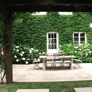 Beautiful Facades With Vines And Climbers 30