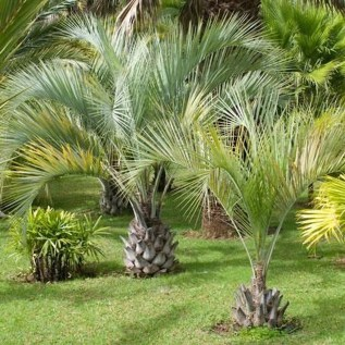 Cute Palm Gardening Ideas For Front Yard 06