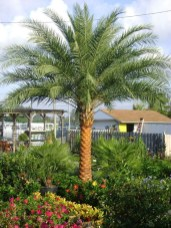 Cute Palm Gardening Ideas For Front Yard 12