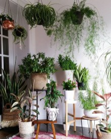 Magnificient Indoor Decorative Ideas With Plants 49