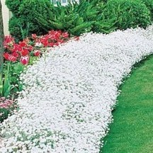 Comfy Low Maintenance Front Yard Landscaping Ideas13