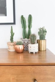Cool Small Cactus Ideas For Interior Home Design11